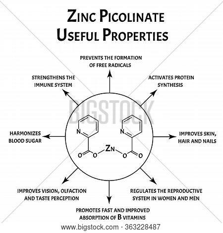 Zinc Picolinate Useful Properties Molecular Chemical Formula. Zinc Infographics. Vector Illustration