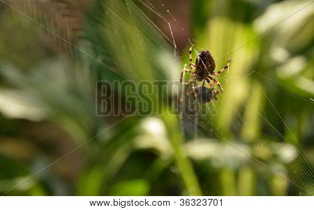 Spider Webbing Its Prey
