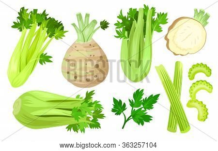 Celery Isolated Cartoon Set Icon. Vector Cartoon Set Icon Vegetable. Vector Illustration Celery On W