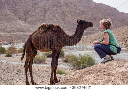Erfoud, Morocco - Oct 17, 2019: A Tourist Girl Cuddling Up To A Dromedary In The Sahara Desert Betwe