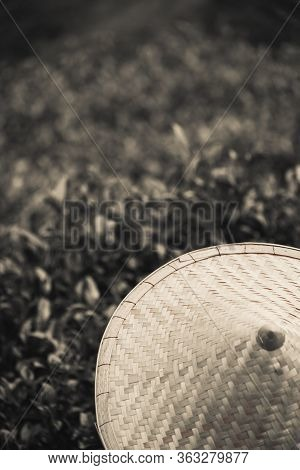 A Retro Clack And White Sepia Closeup Of An Asian Conical Hat Against A Tea Plantation Landscape And