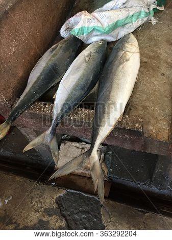 Close Up Of Fishs On A Market In Sansibar
