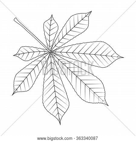 Chestnut Leaf Vector Icon.outline Vector Icon Isolated On White Background Chestnut Leaf .