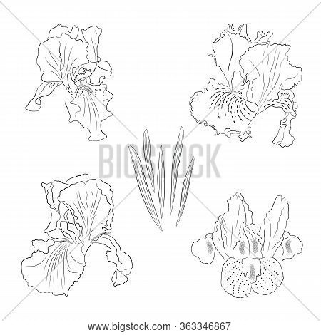 Set The Contour Black-and-white Image Of A Flower Of Iris. Hand Drawn Flowers And Buds In Line Art S