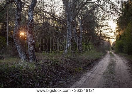 Cycling Through Forest In Sunset. Dirty Road In Forest Nature. Green Forest Road. Nature. Road. Natu