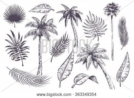 Sketch Palm Trees And Leaves. Hand Drawn Tropical Palms And Leaf, Black Line Silhouette Exotic Plant