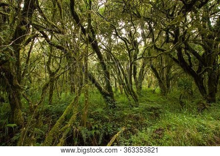 Trees In A Rainforest Somewhere In Africa