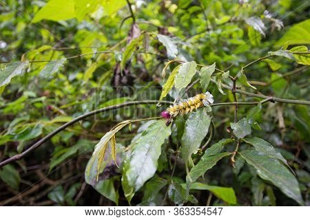 Yellow And Red Caterpillar In A Jungle In Africa