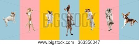 Young Dogs Jumping, Playing, Flying. Cute Doggies Or Pets Are Looking Happy Isolated On Colorful Or