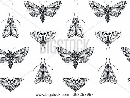 Vector Seamless Pattern With Hand Drawn Insects. Entomological Magical Endless Background.