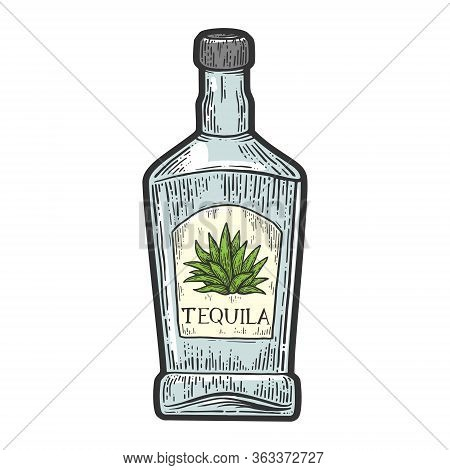 Tequila Bottle Mexican Alcohol Color Sketch Engraving Vector Illustration. T-shirt Apparel Print Des