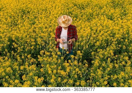 Aerial View Of Farmer Using Drone Remote Controller In Blooming Rapeseed Field. Smart Farming Concep