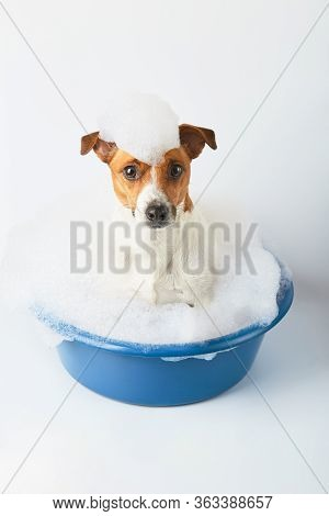 Dog Bathes In A Basin With Foam On Her Head On A White Background. Funny Dog