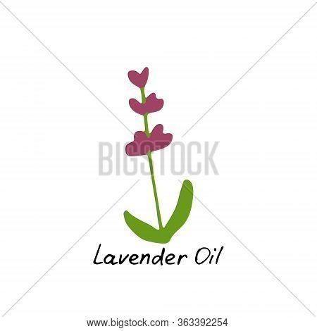 Lavender Essential Oil Logo. Aromatherapy Logo. Hand Drawn Icon With Hand Written Inscription. Aroma