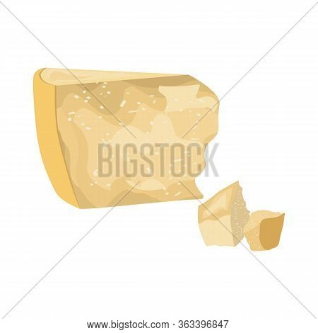Parmesan Cheese Fresh Organic Dairy Product Vector Illustration