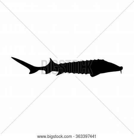 Sturgeon Fish Delicacy Seafood Organic Delicious Vector Illustration Silhouette