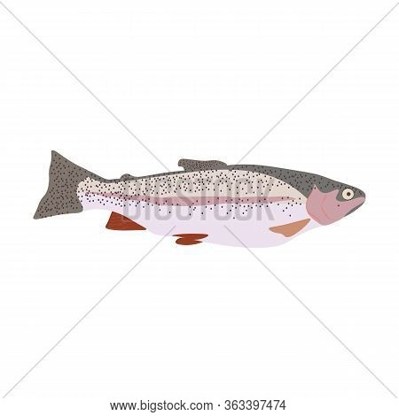 Trout Fish Nature Healthy Food Vector Illustration