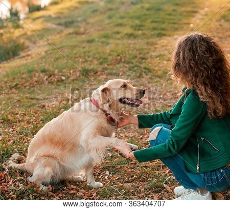 Golden Retriever Dog Sitting Give A Paw To Owner. Training The Dog, Woman With Her Dog Yellow Leaves
