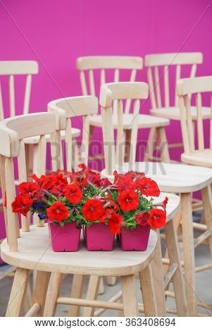 Petunia ,petunias In The Pink Tray,petunia In The Pot, Red Petunia On The Wood Chair