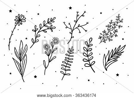 Mystical Flowers And Branches And Leaves With Stars. Mystic, Alchemy, Occult Concept.