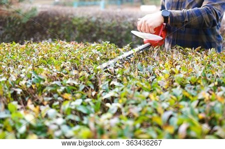 Man Shaping Bushes With An Electric Trimmer For Shrubs