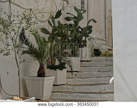 Flowers On The Stairs. White Cozy Cities Of Apulia.