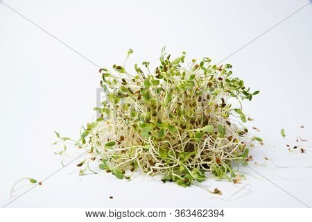 Brocoli Sprouts On A Spoon Isolated On White Background