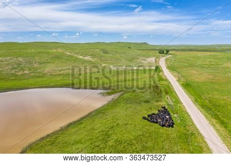 sandy ranch road in Nebraska Sandhills, summer aerial view with cattle