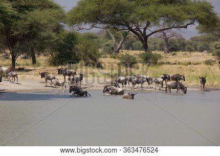 Elephants At A Billabong On A Sunny Day