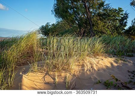 Grass Growing Healthily On Sand Dunes At The Beach, Late Afternoon Light And Shadows