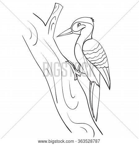 Woodpecker Sits On A Tree And Works, Outline Drawing, Coloring Book, Isolated Object On A White Back