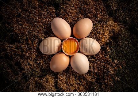 Fresh Farm Eggs. Fresh Brown Organic Chicken Eggs