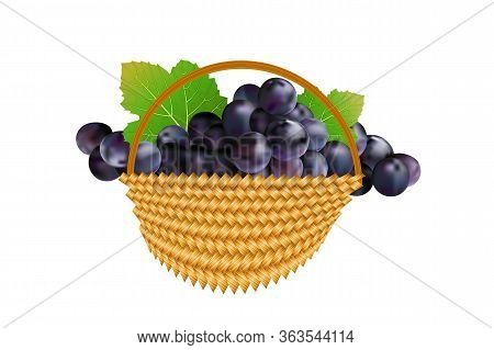 Grapes In Basket Isolated On White Background. Wicker Basket And Bunches Ripe Black Grapes With Leav