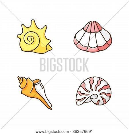 Various Seashells Rgb Color Icons Set. Sea Shells Collection Hobby, Conchology Rock Shell, Scallop,
