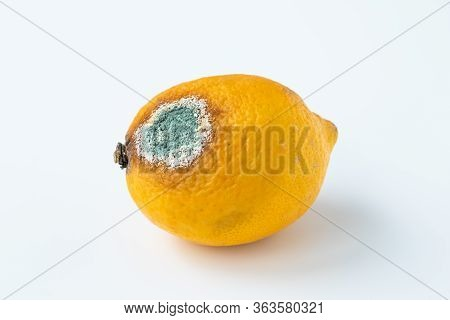 Mouldy Lemon On White Background. Rotten Citrus With Fungus. Bad Quality Of Fruit