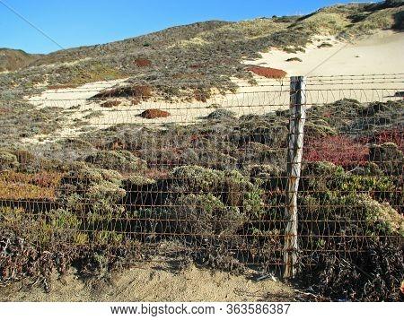 Colorful Sand Dunes On Monterey Bay Beach California