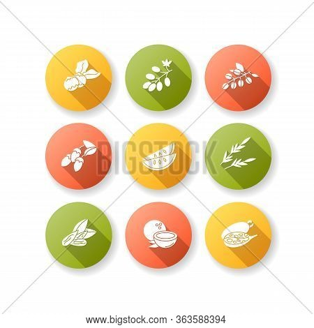Hair Oil Ingredients Flat Design Long Shadow Glyph Icons Set. Jojoba Essence For Nourishment. Coconu