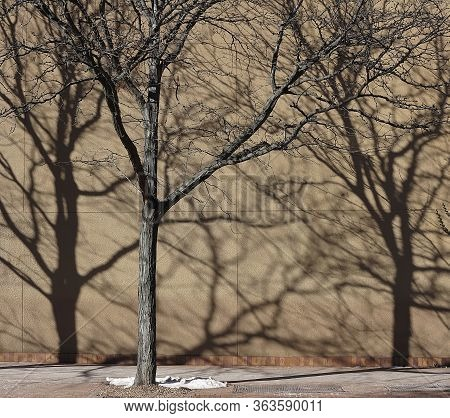 One Tree And Two Intricate Shadows On An Brown Wall