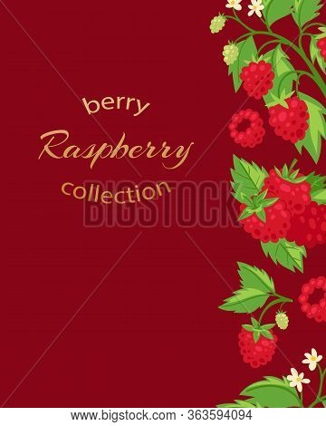 Raspberries Luxury Poster With Berries And Leaves And Typography Cartoon Vector Illustration. Summer