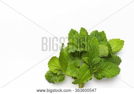 Fresh Green Leaves Of Mint, Lemon Balm, Peppermint Isolated On White Background Top View Copy Space.