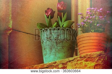 Beautiful And Colorful Flowers In Front Of A Window