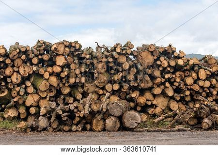 Firewood, Sawn Trees. Woodpile - Stack Of Wood.
