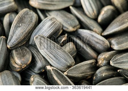 A Pile Of Sunflower Seeds. A Closeup Of Dry Sunflower Seeds. Appetizing Seeds. The Texture Of Black