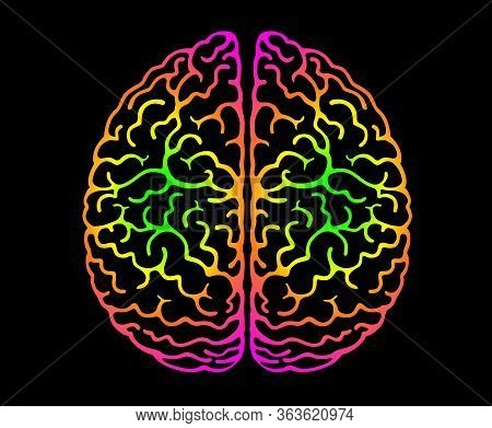 Human Brain. Bright Colors Black Background. Cerebral Hemispheres, Convolutions Of The Mind Brain, B