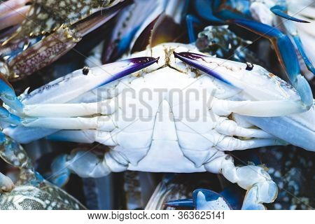 Background Of Colorful Crabs With Blue Legs And Claws In The Thailand Fish Market. Dark Purple Crab
