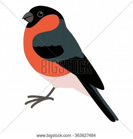 Bullfinch Bird, Vector Illustration, Flat Style, Profile Side