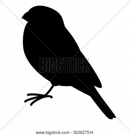 Bullfinch Bird, Vector Illustration,  Black Silhouette, Profile Side
