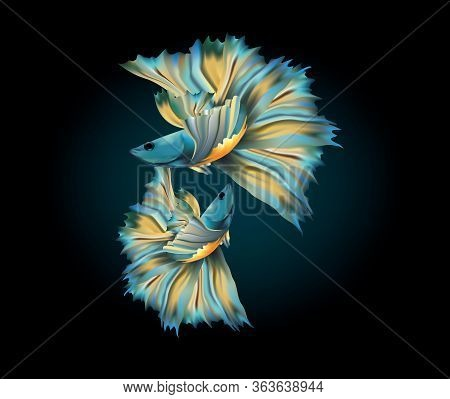 Beautiful Blue Metallic Siamese Fighting Fish With Yellow Fancy Fins On A Dark Background