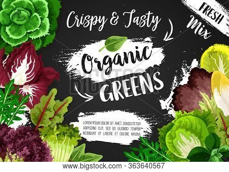 Salads And Greens, Vegetarian Food Vegetable Lettuces And Vegan Cooking Food. Organic Bio Arugula, C