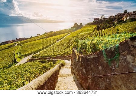 Lavaux, Switzerland: Hiking Trail Among Vineyard Terraces With Lake Geneva View During Sunset, Canto